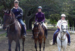 Horse Riding at Centennial Park