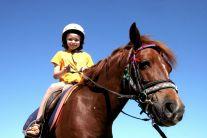 pony rides centennial park australia