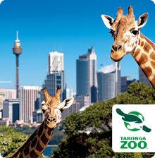 Gariffe Taronga Zoo